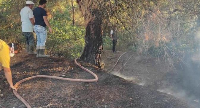 Balıkesir ve Adana'daki yangınlar kontrol altına alındı