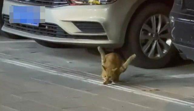 Bacakları ters kediyi görenler görenler gözlerine inanamadı! İğrenç gerçek sonradan ortaya çıktı...