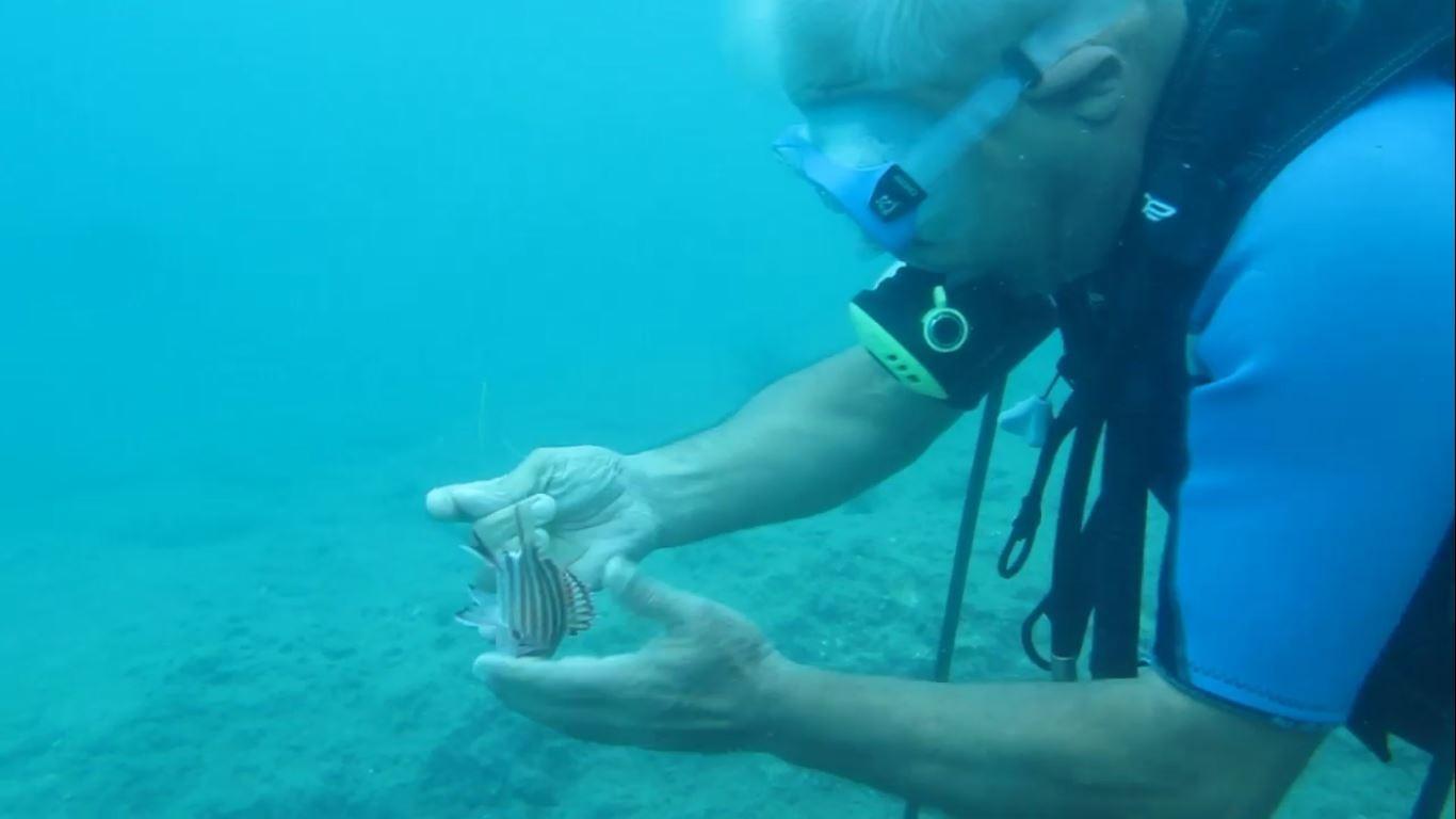 Naylon balığı kayalıklarda mahur kaldı! İmdadına profesör yetişti