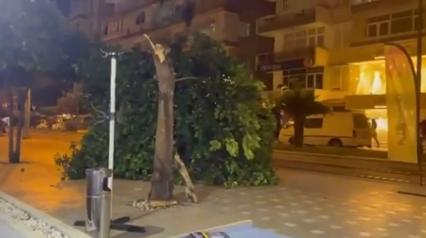 Antalya'da ağaç devrildi! Bir vatandaş saniyelerle kurtuldu