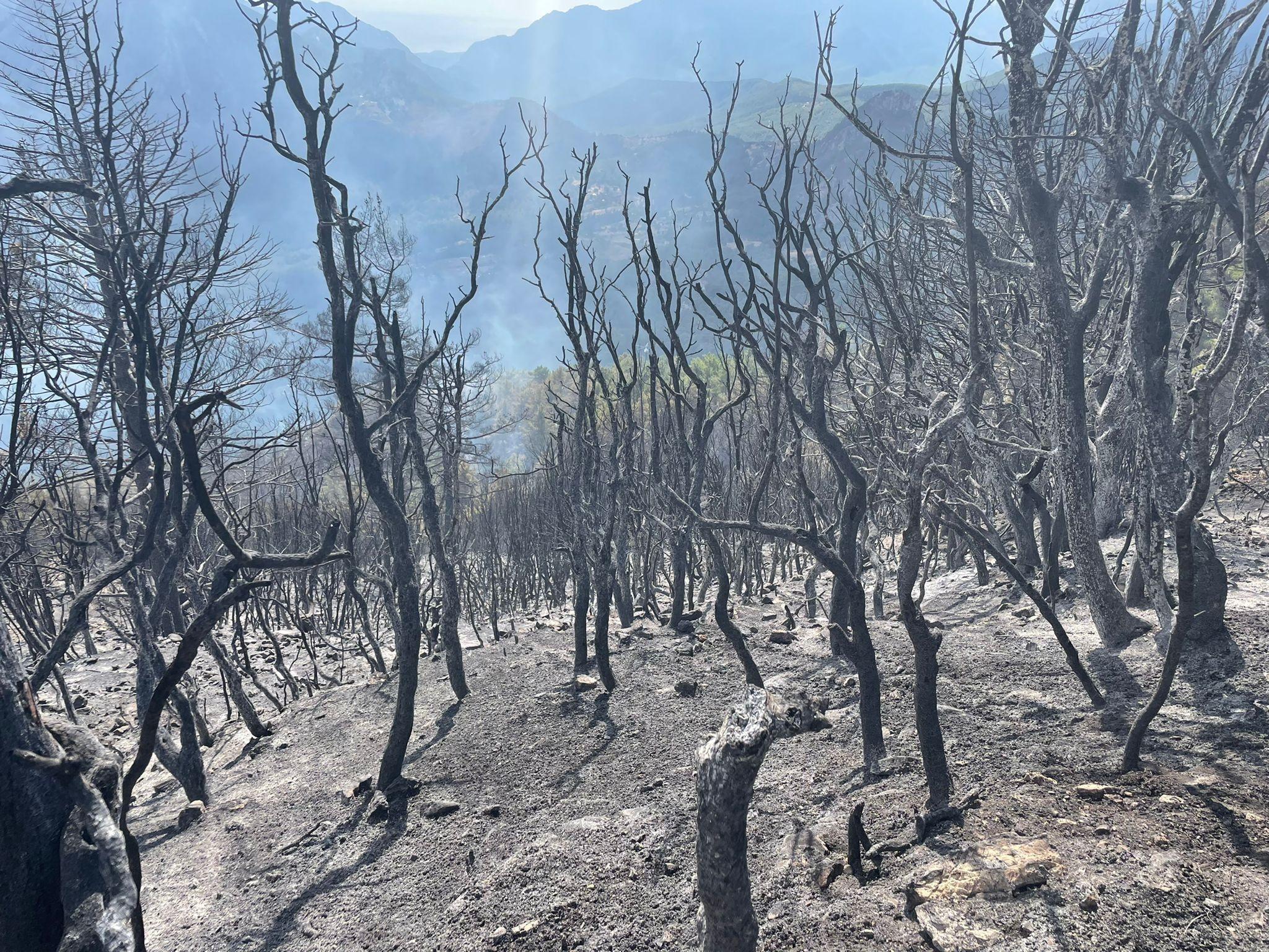 Antalya Üçoluk'taki yangın şimdilik kontrol altında