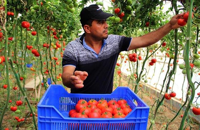 Antalya halinde domatesin fiyatı geçen yıla göre yüzde 135 arttı