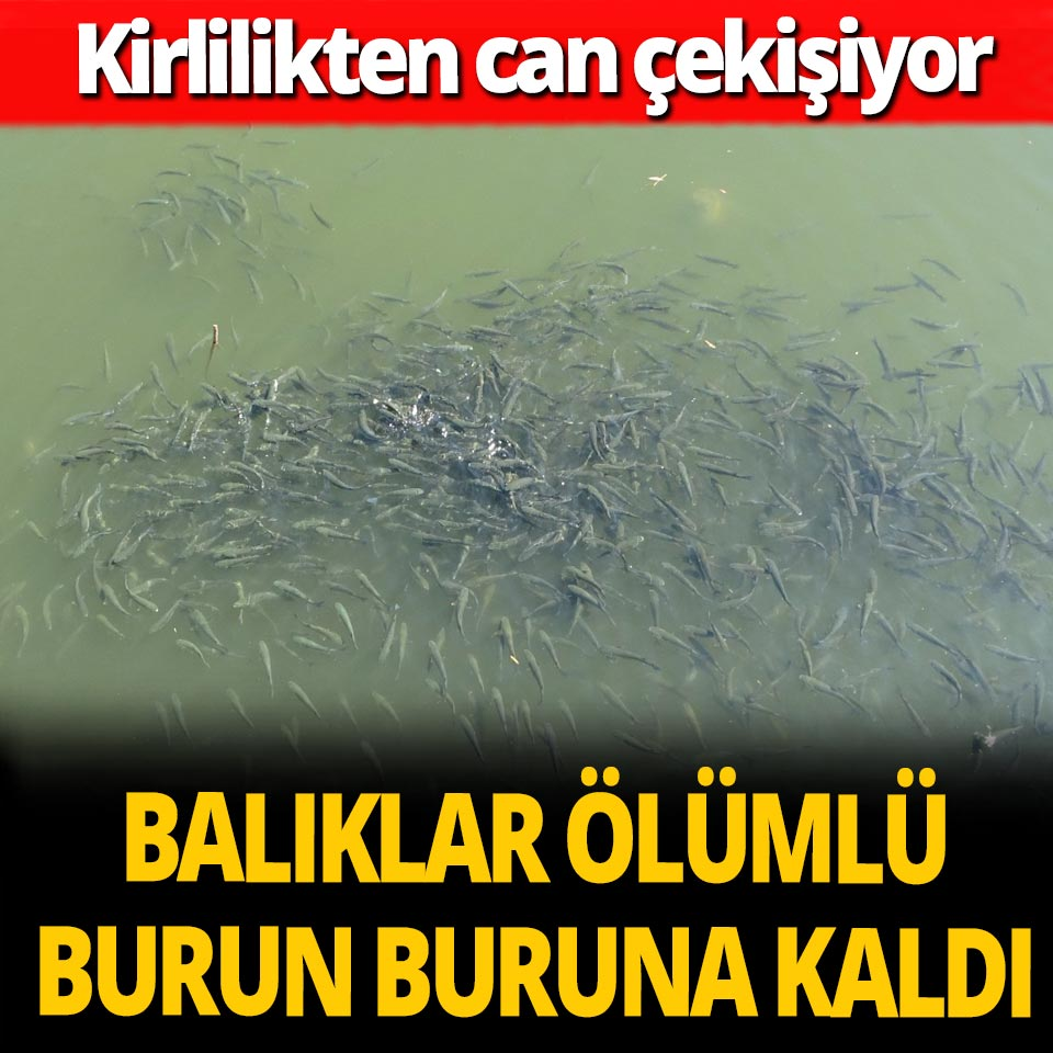 Nifrit Deresi'nde balıklar kirlilikten can çekişiyor