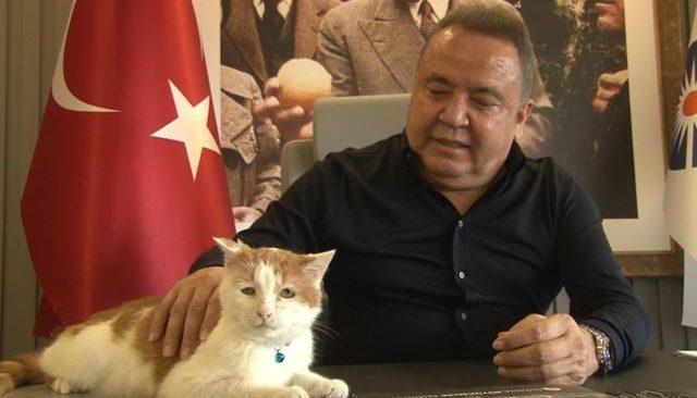 58'inci Antalya Altın Portakal Film Festivalinin akrediteli maskotu 'Toros'