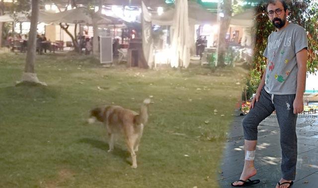 Kızına balon almak istedi! Köpeğin saldırısına uğradı...